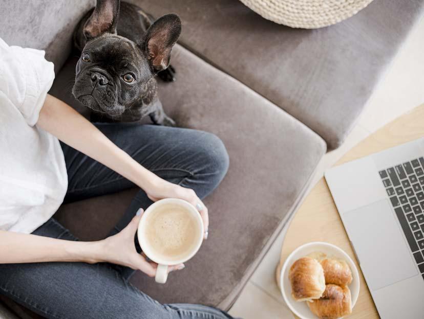 Породи кучета, подходящи за отглеждане в апартамент