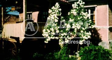 Къща/Вила, Божевци, 100552, Снимка 3