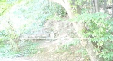 Парцел/Терен, София, Бояна, 162554, Снимка 2